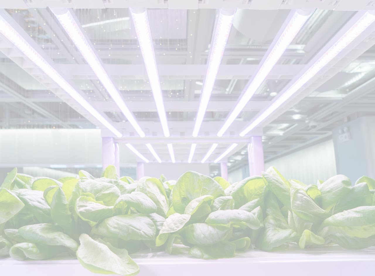 Grow Lights - 0